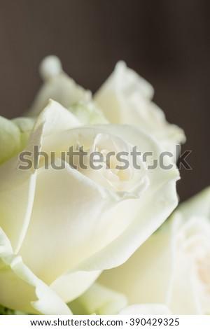Roses close up #390429325