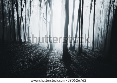 bright light in misty forest