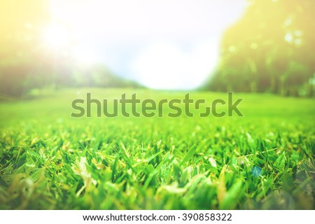 Close up green grass field with blur park background,Spring and summer concept,vintage filter #390858322