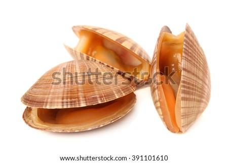 fresh clams on white background #391101610