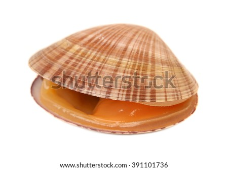 fresh clams on white background #391101736