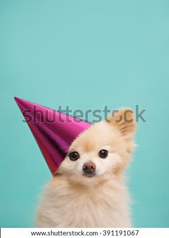 small cute puppy with pink hat at bright background