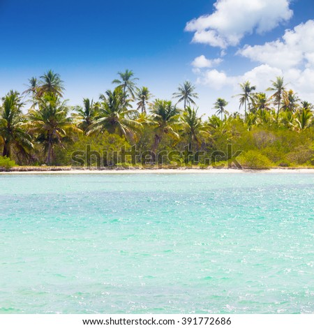 Caribbean wild beach with palm trees at blue lagoon, Saona Island, Dominican Republic #391772686