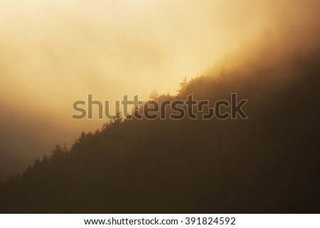 Foggy landscape  #391824592