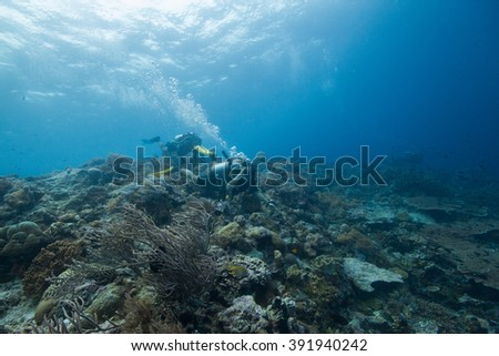 Divers #391940242