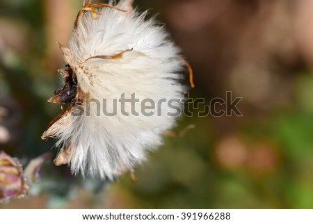 Macro flowers and insects #391966288
