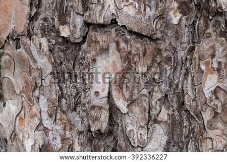 Pine tree bark texture #392336227