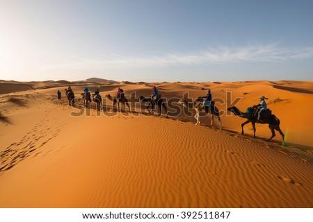Caravan going through the sand dunes in the Sahara Desert, Morocco #392511847
