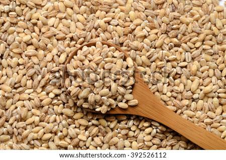 Uncooked barley grain seeds close up shot #392526112