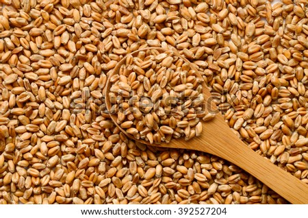 Uncooked wheat grain seeds close up shot #392527204