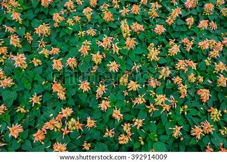wallpaper orange flower with green leaf #392914009