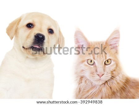 kitten and puppy on a white background isolated #392949838