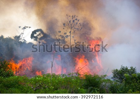 Brazilian Amazon Forest burning to open space for pasture