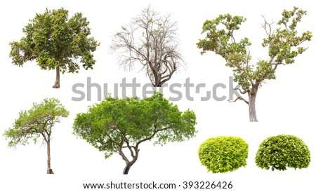 Collection of isolated tree and bush on white background #393226426