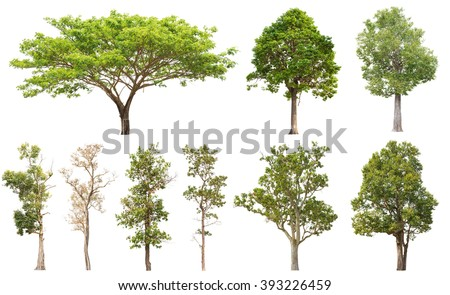 Collection of isolated tree on white background #393226459