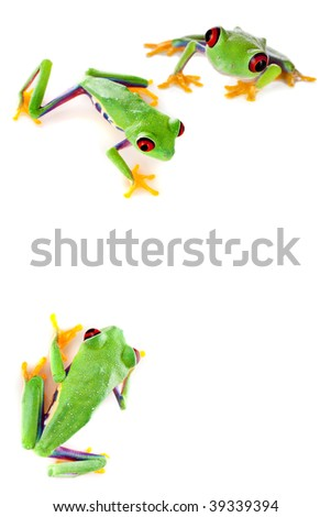 Young red eyed tree frogs isolated on a white page #39339394