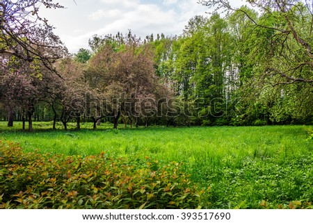 lawn in the shade of fruit trees of green fruit garden in spring #393517690
