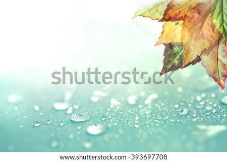 The Autumn leaves and  rain water drops background