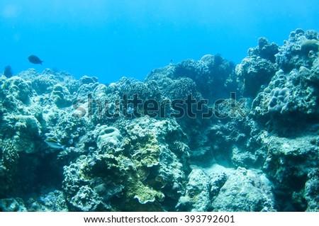Corad reef of sunbeams in blue water #393792601