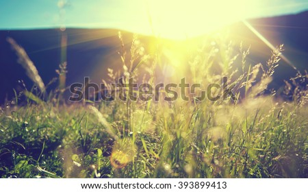 Beautiful nature landscape - Alpine meadow. Grass closeup with sunbeams. Beautiful Nature landscape with sun flare. Vintage Sepia toned #393899413