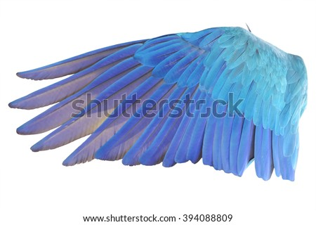 Angel wings isolated on white background. This has clipping path. Royalty-Free Stock Photo #394088809