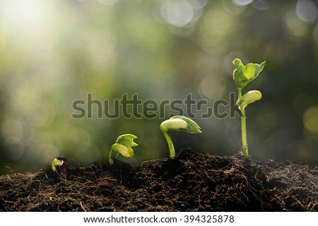 Young plant growing in the morning light and green nature bokeh background  , new life growth ecology business financial progress concept ,Earth Day  Royalty-Free Stock Photo #394325878