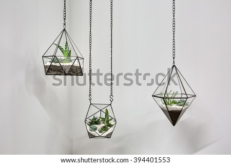 Three glass vases with metallic frames. The vases are hanging on chains on the gray wall background. Inside vases there are plants, ground and pebbles. Close-up photo. Horizontal. #394401553