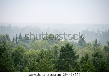 panoramic view of misty forest. far horizon #394416724