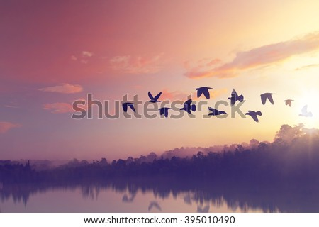 Sun shining and birds silhouettes flying sunset sky  go home Royalty-Free Stock Photo #395010490