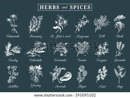 Herbs and spices set. Hand drawn officinalis, medicinal, cosmetic plants. Engraving botanical illustrations for tags. Vector healing wild flowers sketches for labels. #395095102