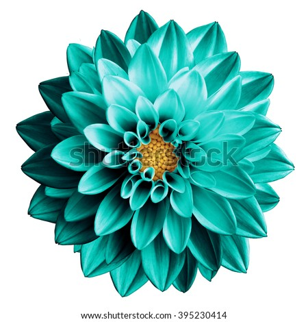 Surreal dark chrome turquoise flower dahlia macro isolated on white #395230414