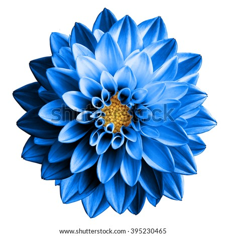 Surreal dark chrome blue flower dahlia macro isolated on white #395230465