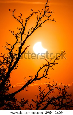 solar eclipse with lone tree #395413609