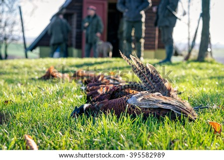 Five dead pheasants lying in a grass after successful hunt. Selective focus. #395582989