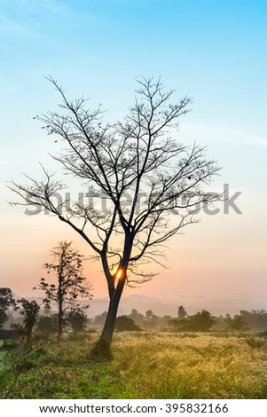 dead tree in country field, tree and sunset background #395832166