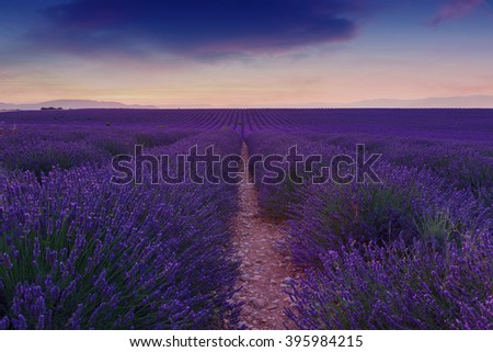 Beautiful colors purple lavender fields near Valensole, Provence in France #395984215