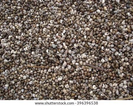 Striped shells #396396538
