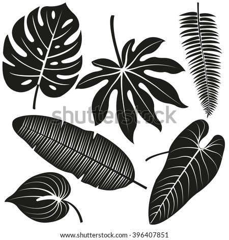 Tropical plant leaves. Vector silhouette collection.