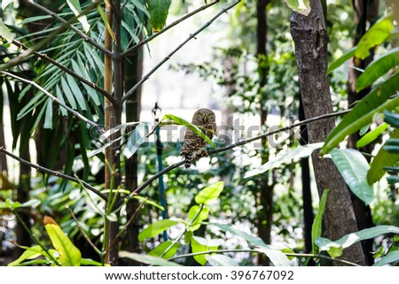 The owl catch branch in shade of  bush. #396767092