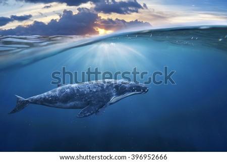 whale in half air half sky