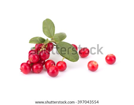 Fresh hand-picked forest Cowberry isolated on white background #397043554