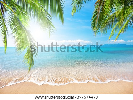 Palm and tropical beach #397574479