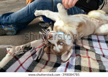 Husky puppy on a picnic in the park #398084785