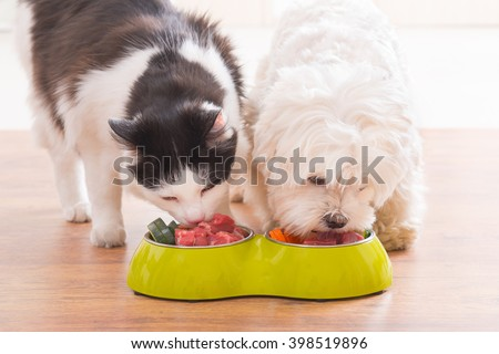 Little dog maltese and black and white cat eating natural, organic food from a bowl at home #398519896