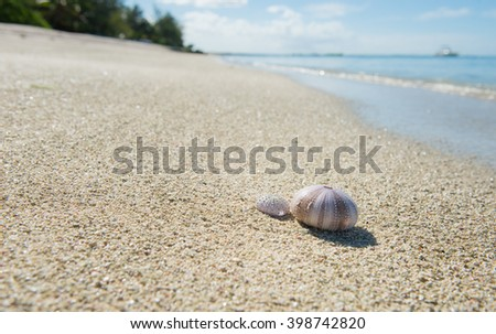 Two urchins on white sand beach in Mauritius Island #398742820