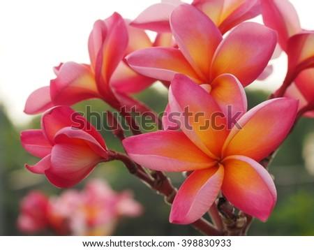 Pink Blooming #398830933