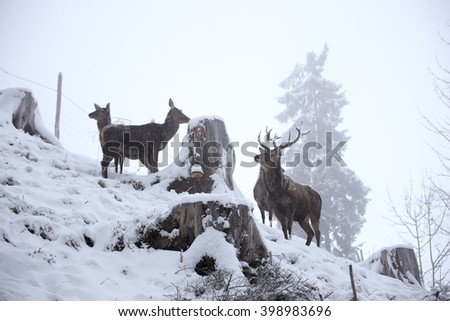 a group of red deers is standing on a hill #398983696