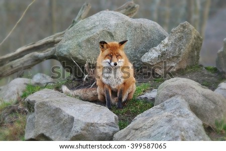 Fox #399587065