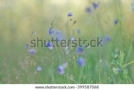 Dreamy Flower Field #399587068