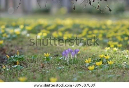 Spring Flowers #399587089
